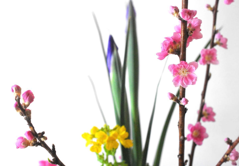 [Ikebana]桃 アイリス 菜の花 Peach Blossom・Iris・Rape Flower左盛体。桃色、黄色、青紫。枝物、しゅっとした茎、柔らかい茎。色も性質もちがうものたちがいるからこそ。春の里のようです。#いけばな #生け花 #活け花 #華道 #ikebana #japaneseflowerarranging #japaneseculture #和ソラ #ソラノサト和文化倶楽部 #ソラノサト #wasora #soranosato